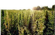 Malawi Legalizes Industrial Hemp