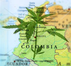 Cannabis Columbia Marijuana