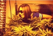 girl with cannabis plant