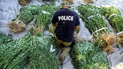 Police with cannabis